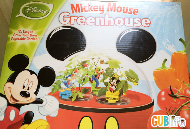 Loving-our-earth-Mickey-Mouse-GreenHouse-vegetable-garden
