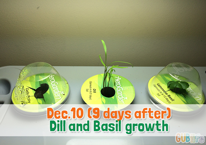 dill and basil aerogarden